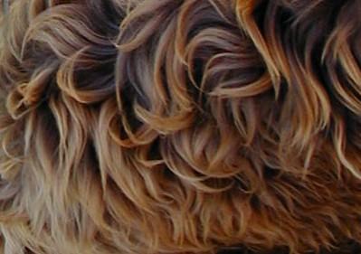 Sproodle Fleece example